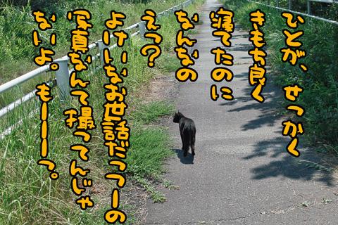 SDIM2446